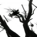 Tree_dance_10